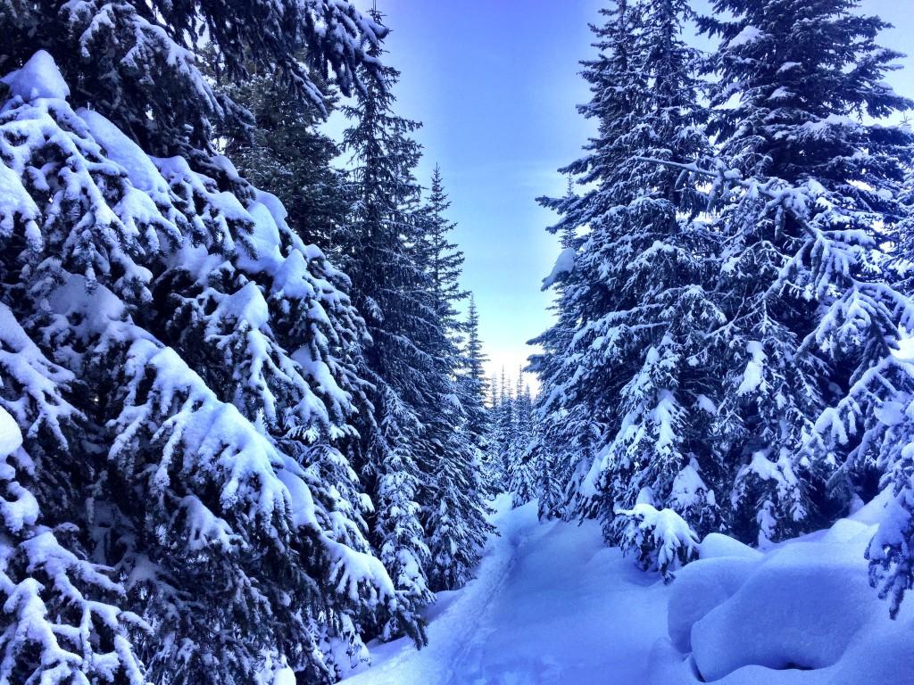 Apex trails